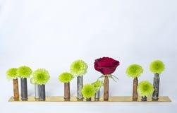 Rad av blommor och den röda rosen i den använda kulan Shell Vases på vit Royaltyfri Bild