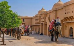 Rad av elefanter på Amber Fort arkivbilder