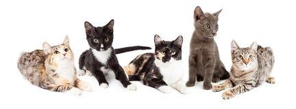 Rad av fem gulliga kattungar tillsammans Fotografering för Bildbyråer