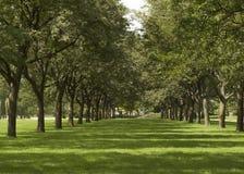 Rad av gröna träd i sommar Arkivbild