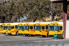 Rad av gula skolbussar fotografering för bildbyråer