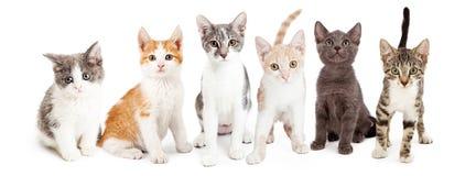 Rad av gulliga kattungar tillsammans Fotografering för Bildbyråer