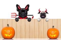 Rad av halloween hundkapplöpning Royaltyfri Bild