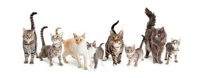 Rad av katt- och kattungehorisontalrengöringsdukbanret Fotografering för Bildbyråer