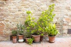 Rad av krukor med växter på en tegelstenvägg arkivfoton