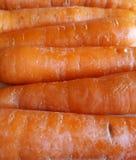 Rad av orange morötter Royaltyfri Foto