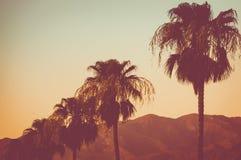 Rad av palmträd och berg på solnedgångPalm Springs royaltyfria bilder