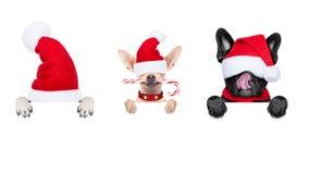 Rad av Santa Claus hundkapplöpning Arkivbild