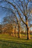 Rad av träd Royaltyfri Bild