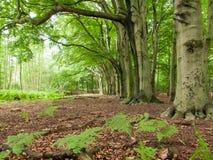 Rad av träd Royaltyfri Foto
