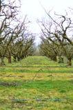 Rad av träd 2 Royaltyfria Bilder