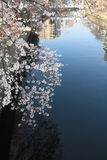 Rad av träd för körsbärsröd blomning längs den Ooka floden, Yokohama arkivfoton