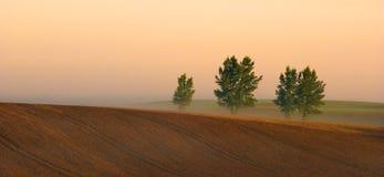 Rad av träd i dimma i höst arkivbilder