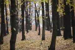 Rad av träd i höstskogen Royaltyfria Foton