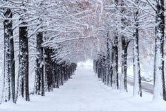 Rad av träd i vinter med fallande snö Arkivbilder