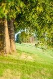 Rad av träd längs det holländska diket fotografering för bildbyråer