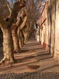 Rad av träd på gatan Royaltyfri Foto
