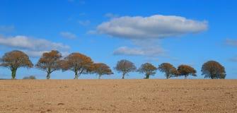Rad av träd på horisonten royaltyfria bilder