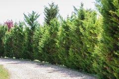Rad av träd på skog arkivfoton