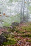Rad av trädstubbar Fotografering för Bildbyråer