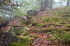Rad av trädstubbar Arkivbild