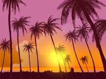 Rad av vändkretspalmträd mot solnedgånghimmel Kontur av högväxta palmträd Vändkretsaftonlandskap Lutningfärg Vektorillus royaltyfri illustrationer
