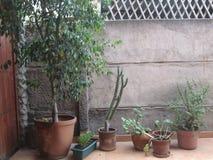 Rad av växter Arkivbild