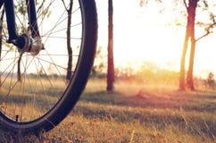 Rad eines Fahrrades wird durch die untergehende Sonne vor dem hintergrund des Herbstwaldherbstwegs auf einem Fahrrad beleuchtet Stockfoto