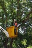 Rada pracownika arymażu drzewa Zdjęcie Royalty Free
