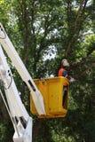 Rada pracownika arymażu drzewa Zdjęcie Stock