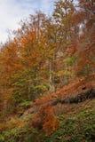 Radan mountain near Prolom Banja.  Serbia Royalty Free Stock Images