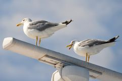 Radar with seagulls Royalty Free Stock Images