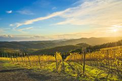 Radda in Chianti vineyard and panorama at sunset. Tuscany, Italy royalty free stock image