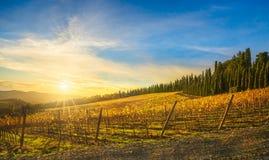 Radda in Chianti vineyard and panorama at sunset. Tuscany, Italy. Radda in Chianti vineyard and panorama at sunset in autumn. Tuscany, Italy Europe stock image