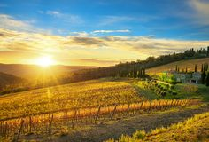 Radda in Chianti vineyard and panorama at sunset. Tuscany, Italy royalty free stock photo