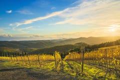 Radda in Chiantiwijngaard en panorama bij zonsondergang Toscanië, Italië royalty-vrije stock afbeelding