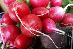 Raddish und Rote-Bete-Wurzeln Lizenzfreies Stockfoto