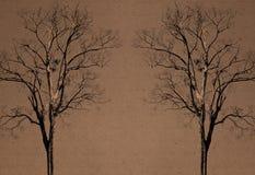 Raddoppi l'albero sopra riciclano la priorità bassa di carta Fotografia Stock