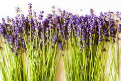 Raden av lavendel blommar på vit bakgrund Royaltyfria Bilder