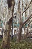 Raden av träd, parkerar i New York City Arkivbilder