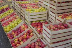 Rader av äpplespjällådor på bönderna marknadsför Royaltyfria Foton
