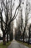 Rader av Autumn Trees Arkivbilder