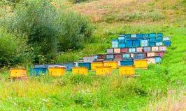 Rader av det färgrika biet gå in i kupan bikupan i solig sommardag arkivfoto