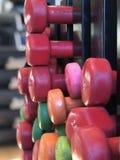 Rader av färgrika hantlar i idrottshallen arkivbild
