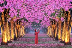 Rader av h?rliga rosa blommatr?d arkivfoto