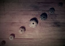 Rader av havsskal Arkivfoto