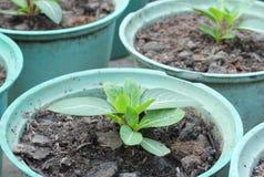Rader av inlagda plantor Fotografering för Bildbyråer