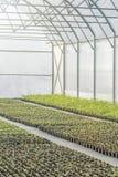 Rader av inlagda plantor i växthus Arkivfoto