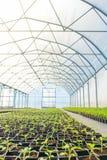 Rader av inlagda plantor i växthus Arkivbilder