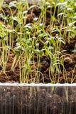 Rader av inlagda plantor och unga växter Arkivbilder